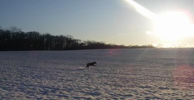 2009年、冬、鹿発見