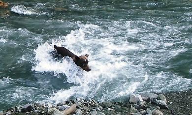 与作の川渡り!