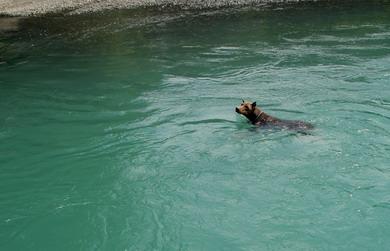 2007年、夏、釣りの邪魔